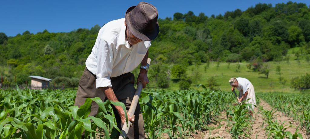 singoli agricoltori che datero commerciale